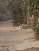 to complain and bring attention towards the problem of stray dogs in dda flats bindapur pkt-3,e-block, dwarka.