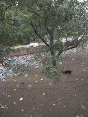 dumping garbage around hospitals and residential premises