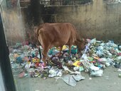 garbage are not clean from 6th jan to till date