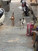 About street dogs