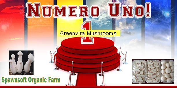 Mushroom Export From India